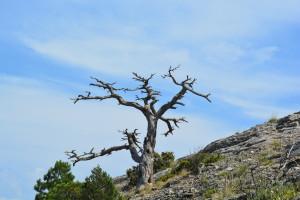 Дерево-олень